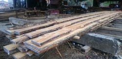 Rough-sawn C ovensii boards 2020
